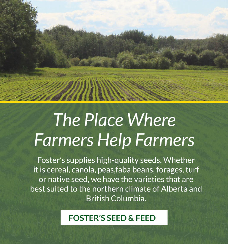 Foster's Seed & Feed - Top Quality Seed Farm - Canola, Cereal, Peas, Oats, Creeping Red Fescue and More